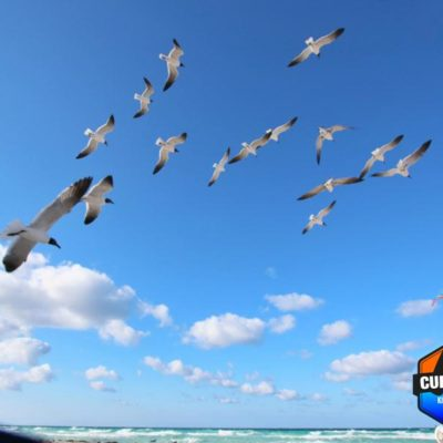 joy-cuba-kite-08
